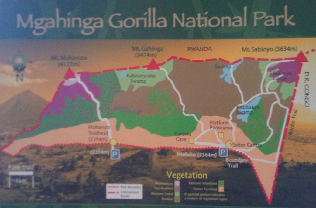 Mgahinga Vegetation