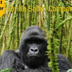 Gorilla Safari Companies